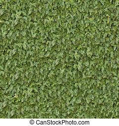 seamless, conífero, verde, texture., surface.