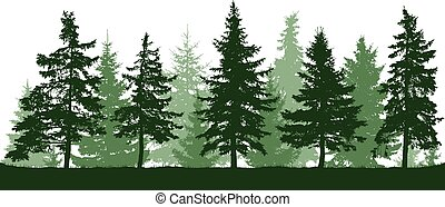 Seamless forest fir trees silhouette. Christmas tree. Parkland, park, garden. Coniferous green spruce. Vector on white background. Isolated, separate objects