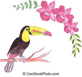 seamless, fugle, ramphastidae, baggrund, billed, fugl, eller...