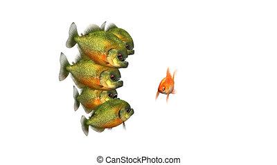 seamless, included, essayer, dire, faire boucle, survivre, fond, contes, piranhas, 3d, canal alpha, poisson rouge, conceptuel, rigolote, animation, blanc, 4k