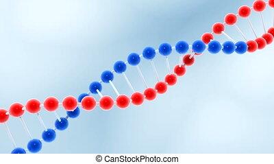 Seamless loop of rotating molecule of DNA