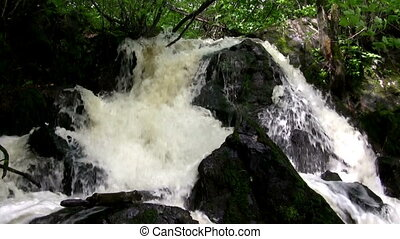 (Seamless Loop) Rugged Forest Water - A small waterfall...