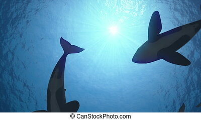 Seamless looping animation of killer whales in backlight -...