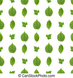 Seamless pattern of raspberry leaves, currant leaves and sweet cherry leaves isolated on white background