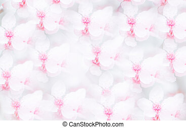 Seamless Pattern With Cherry Blossom Background