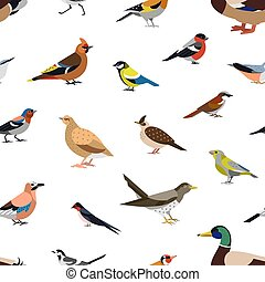 Seamless pattern with wild forest birds on white background....