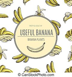 Seamless pattern.bananas of vector sketches.Detailed citrus drawing.Vintage sketch style illustration