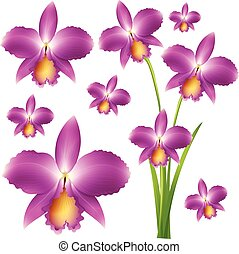 Seamless purple orchid flowers