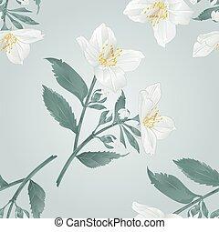 Seamless texture Jasmine flowers vector