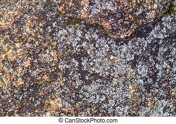 Seamless Texture of Weathered Concrete Surface with Stains of Fungus.