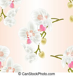 Seamless texture  Orchid  stem with white flowers  vintage  vector.eps