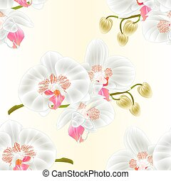 Seamless texture Orchid  white stem with flowers and  buds  vector.eps