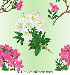 Seamless texture pink and white rhododendron branch vintage...