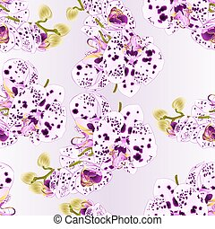 Seamless texture stem  Orchid dots purple and white Phalaenopsis    vector.eps