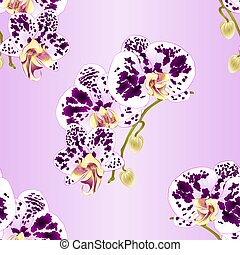 Seamless texture stem Orchid Phalaenopsis spotted  flowers and buds vector.eps
