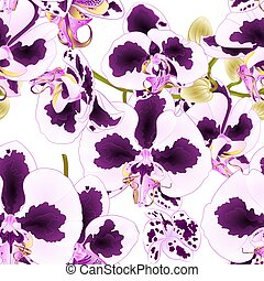 Seamless texture stem Orchid Phalaenopsis with spots purple and  white flowers vector.eps