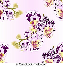 Seamless texture stem with flowers and  buds Orchid Phalaenopsis spotted vector.eps