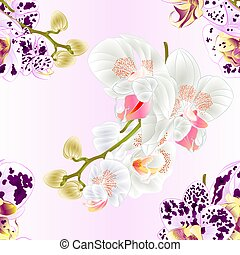 Seamless texture stems with flowers and  buds Orchid Phalaenopsis spotted and white vector.eps