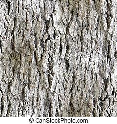 seamless texture white tree bark wallpaper background