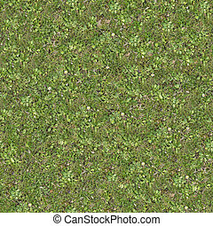 Seamless Tileable Texture of Forest Lawn with White Flowers.