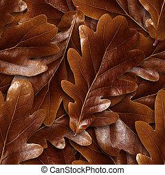 seamlessly, ブラウン, オーク, leafs, バックグラウンド。