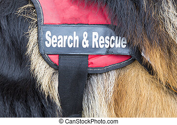 Search and rescue dog. The animal is part of the rescue team of Red Cross Organization.