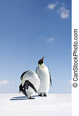 Search - Penguins are searching for something, looking up ...