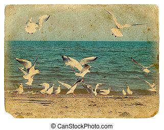 seascape, com, seagulls., antigas, postcard.