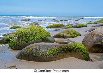 seascape, costa, califórnia, musgo, coberto, pedras