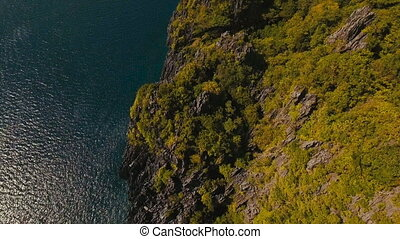 Seascape: Ocean cliff with a forest. aerial view.