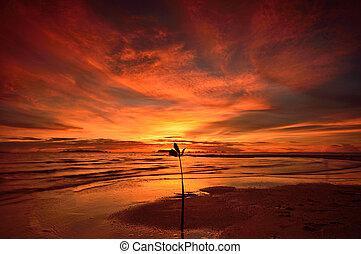 seascape - Seascape, Ko samui thailand, famous place in the...