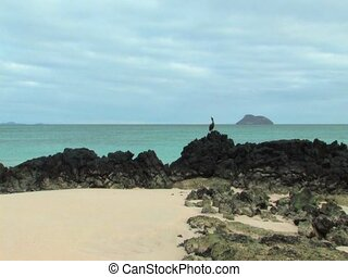Seascape with bird on the Galapagos Islands