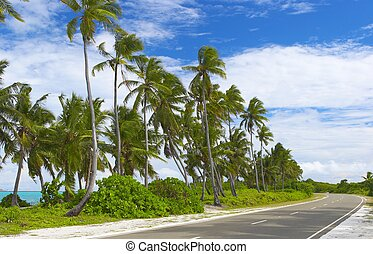 Seascape view with palmtrees on the iland Gan in Indian ...