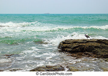 seascape with a Eastern reef egret bird