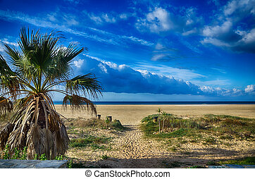 Seascape with beach and palms