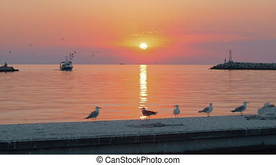 Seascape with boat and seagulls at sunset - Slow motion shot...