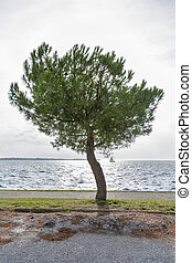 Seascape with pine tree in back lit