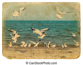 Seascape with seagulls. Old postcard. - Seascape with...