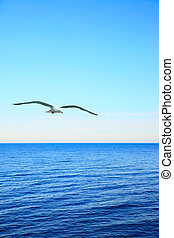 Seascape with soaring sea-gull