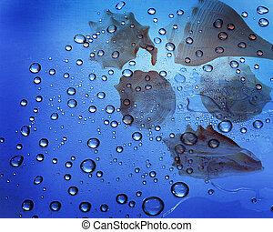 seashel, пузырь