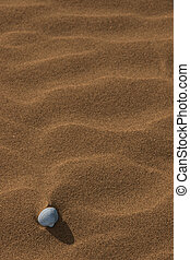 seashell, 2
