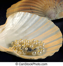 seashell and pearl necklace - studio shot of a necklace with...