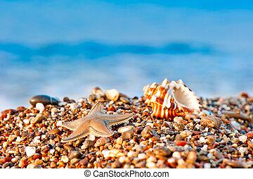 seashell and starfish on a pebble beach on sea background