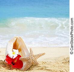 Seashell and starfish with tropical flowers on sandy beach in Hawaii, Kauai