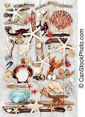 seashell, arte abstrata, driftwood
