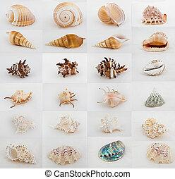 great image of twenty four seashells on white or grey