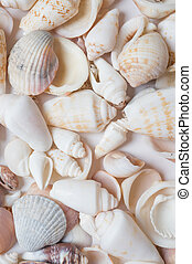 seashell background. in studio