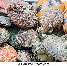 Seashell background Shellfish molluscs