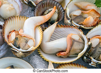 Seashell background Shellfish molluscs