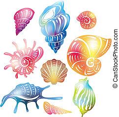 seashell, barwny